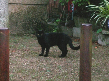 20100815長谷寺(06)白髭神社の黒猫.JPG