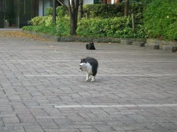 20100830朝にゃん(1).jpg
