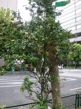 201008街角の風景(01).jpg