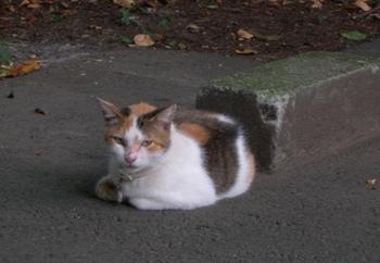 201008街角の風景(11).jpg