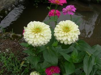 20100923(23)津和野の町並み.JPG