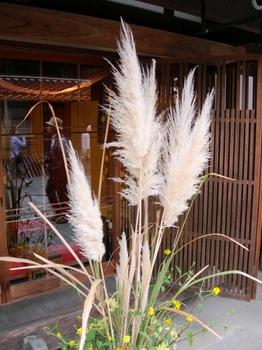 20100923(52)三松堂菓心庵店先のパンパスグラス.JPG