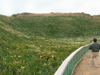 20110131伊豆(26)爪木崎の水仙.JPG
