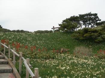 20110131伊豆(30)爪木崎の水仙.JPG
