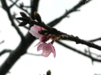 20110131伊豆(77).JPG