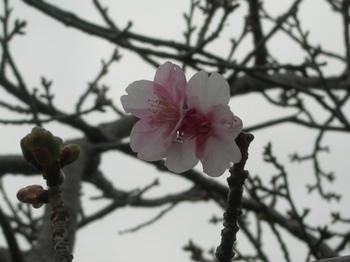 20110131伊豆(81).JPG
