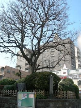 20110227(09)志村一里塚.JPG