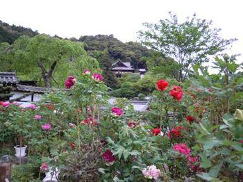 20110507(22)本堂遠望.JPG