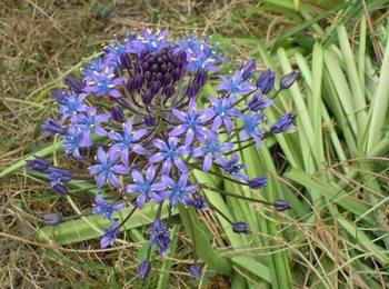 20120512(04)紫の花.jpg