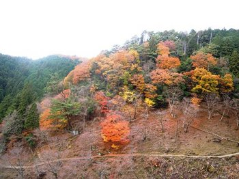 20121124(09)西行庵付近の紅葉.jpg