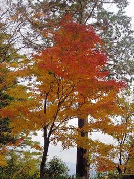 20121124(15)紅葉と黄葉.jpg