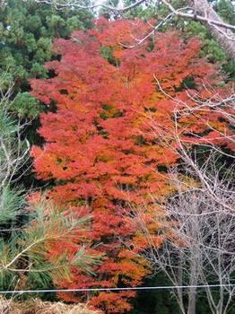 20121124(18)高城山展望台付近の紅葉.jpg