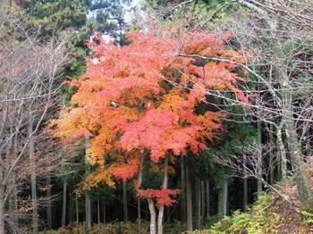 20121124(19)高城山展望台付近の紅葉.jpg