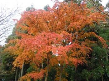 20121124(20)高城山展望台付近の紅葉.jpg
