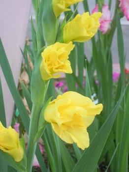 お花(06).JPG