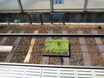 京阪坂本線06.JPG
