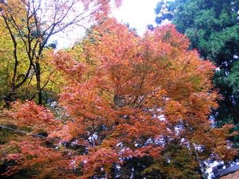 吉野詣(12)-3金峯神社境内の紅葉.JPG