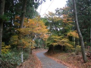 吉野詣(13)-1奥千本から下る.JPG