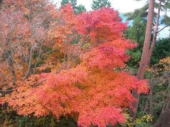 吉野詣(14)-4紅葉.JPG