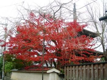 吉野詣(26)紅葉と塔.JPG