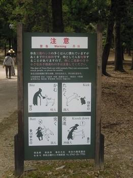 奈良興福寺10.jpg