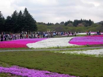富士芝桜祭り02.jpg