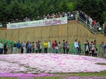 富士芝桜祭り03展望台の行列.jpg