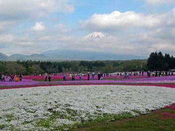 富士芝桜祭り04富士山.jpg