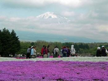 富士芝桜祭り05富士山.jpg