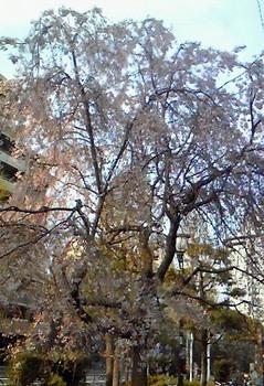 東京の花(04).JPG