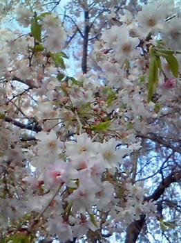 東京の花(05).JPG