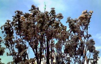 東京の花(09).JPG