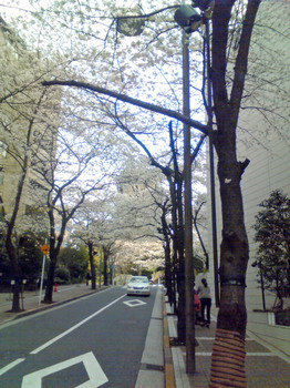 桜坂1.jpg