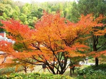 淡路(16)公園の紅葉.JPG