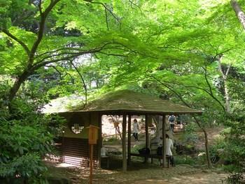 滝見の茶屋.jpg