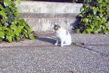 舟渡公園のネコ.JPG
