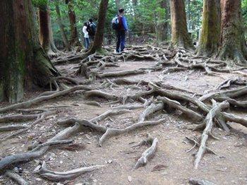 鞍馬寺奥の院10木の根道.JPG