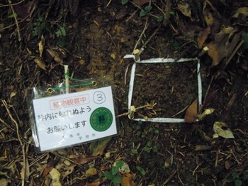 鞍馬寺奥の院12植物観察中.JPG